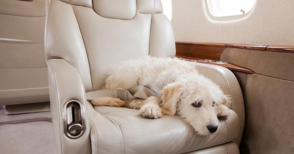 Peut-on emmener ses animaux de compagnie dans un jet privé ?